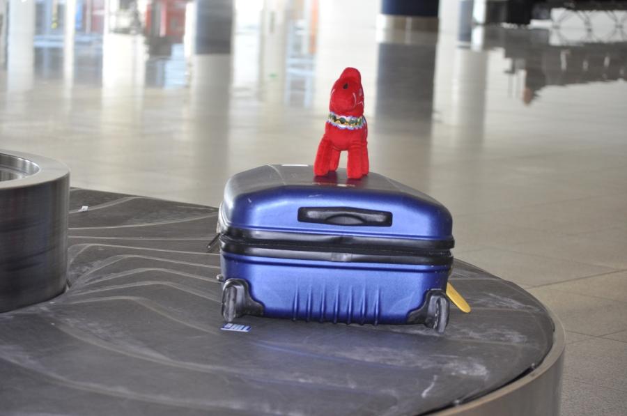 Mora-Nisse blev så himla glad när han såg min väska komma ut på rullbandet, så han hoppade upp på den.