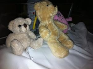 För att inte Astrid ska få sin samma björnskräck som sin far har hon två stycken snälla björnan på sitt bord. Den ena sitter hela tiden.