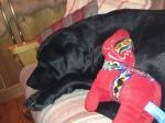 Mora-Nisse trivdes med Westbergarnas hund Molly