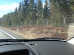 """Det har kommit upp en """"Guldbyn""""-skylt vid Älgaryd på gränsen mellan Småland och Västergötland. Detta tack vare Peter Arnessons individuella VM-guld i skidorientering i vintras. Peter och jag har klubbkompisar i Hallby 2011 och det är en jäkligt rolig filur."""