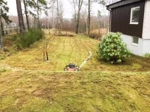 Att riva mossa på en gräsmatta som är en mosmatta tar tid. Detta är ca halva ytan.
