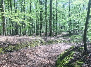 Osbecks bokskogar är vackrare i verkligheten än på bild
