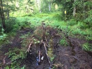 Ibland lerigt underlag mellan Grotfallets skidstadion och Ljungåsen, men ibland fin stig