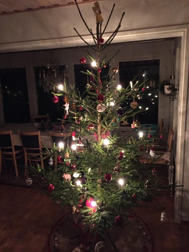 Årets julgran. Som vanligt från svärföräldrarnas skog
