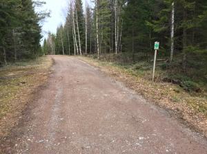 Jag sprang 7,5 km på 5- och 10 km-spåren. Ofta såg det ut så här. Bra för skidåkning med breda gator eftersom snö når marken, men lite trist för löpning. Nästa gång ska jag leta mig in på stigar istället.
