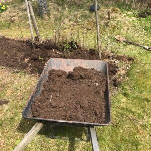 Vårbruk igår. Gamla jorden från växthuset hamnade på våra hallonbuskar. Växtligheten är f ö under all kritik på vår tomt. Känns som växtzon 8 ungefär.