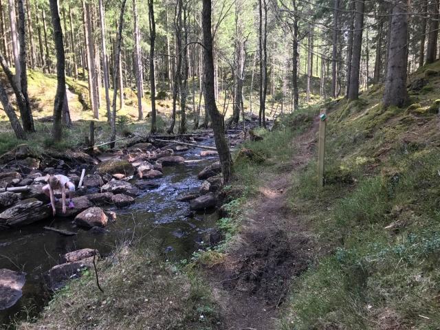 Det är en lyx att en av Borås finaste vandringsleder passerar 500 meter från där vi bor