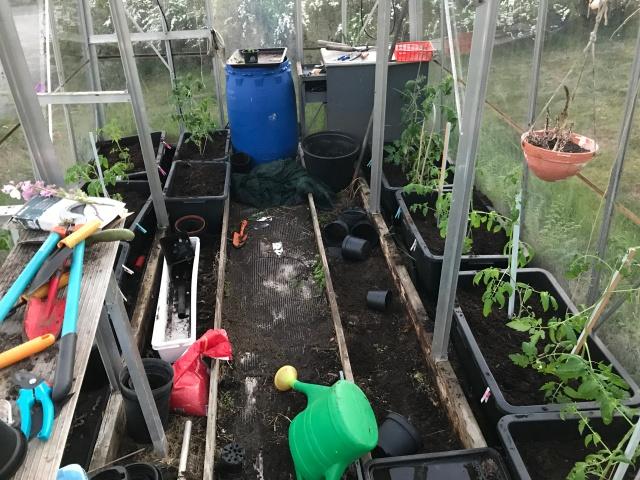 I helgen pillade vi en del i växthuset och nu finns där fjorton tomatplanter som är redo att skördas om ett tag. Förra året skördade vi de sista i oktober.