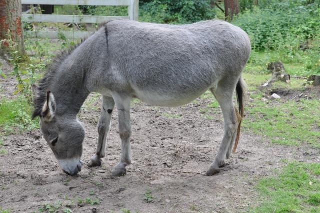 Häst, åsna, mula och mulåsna. Jag börjar sent omsider få lite koll på hur allt ligger till.