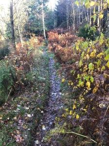 Rya Åsar Trail Run. Så här såg det ut då jag sprang delar av banan för några veckor sedan.