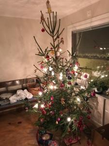 Vår julgran 2017
