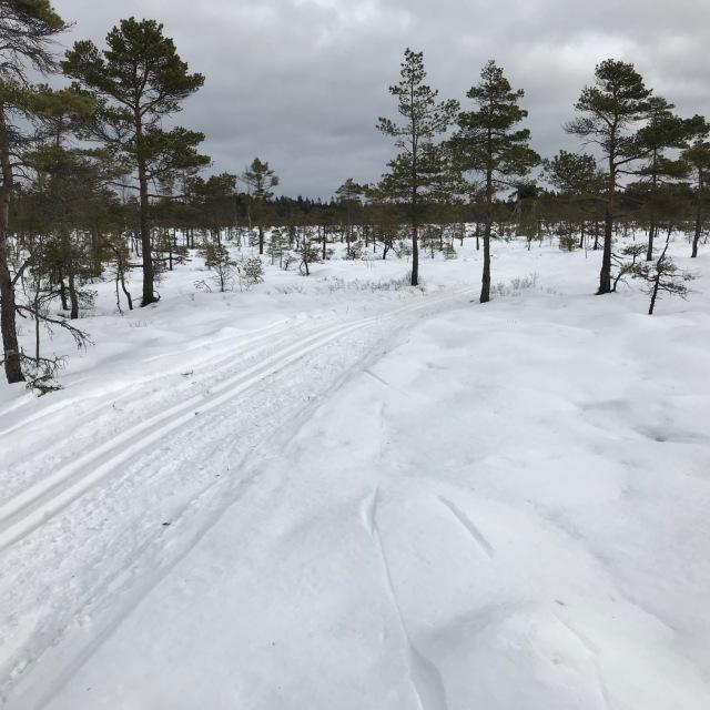 Skare på mossen vid Nordtorps 7,5 km-spår