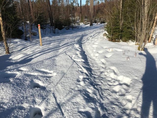 Sjömarkens elljusspår på skidor. Inte helt lätt att åka, men skaren bar jämte där folk hade gott så det gick helt ok.