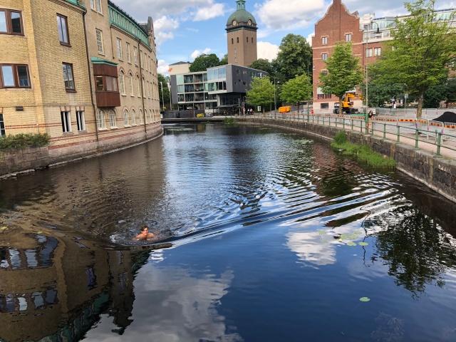 Rickard Bergengren simmar i Viskan i Borås