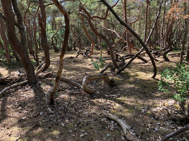Trollskogen i Vejbystrand. En fantastisk naturlig lekplats där vi kan hänga i timmar.