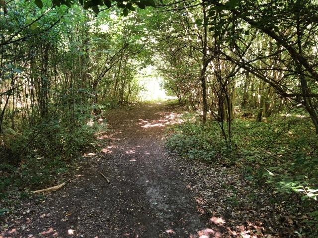 Jag kan tycka det är lite småtråkigt att springa i Vejbystrand ibland. Men skogarna vid Sommarsol samt vid tennisbanan är fina. I båda fallen går det att få en runda på ca 1-2 km om man vill.