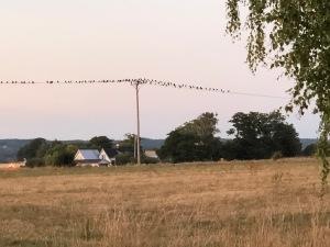 """När vi såg det här sade Astrid """"Jag tror fåglarna går på lina""""."""
