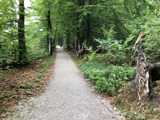 Milspåret vid Skryllegården såg ofta ut så här. Lite breda stigar och lite för många flacka raksträckor för min smak, men på det hela taget ett fint milspår. Och bokskog är alltid vackert!