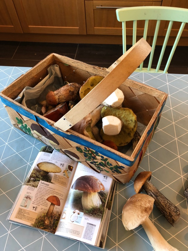 Bra sopp-år i år. Ida var ute och plockade svamp med barnen i Sjömarken för några dagar sedan.