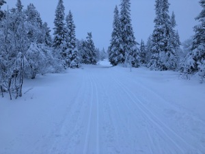 Snöiga skidspår i Storhogna