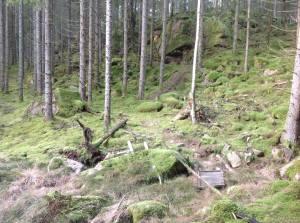 v´Tre sjöar Trailrun vid Smeatorpet. Arrangör: Fritsla VIK