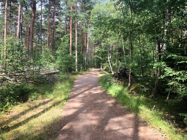 Skogen sydväst om Råbocka camping