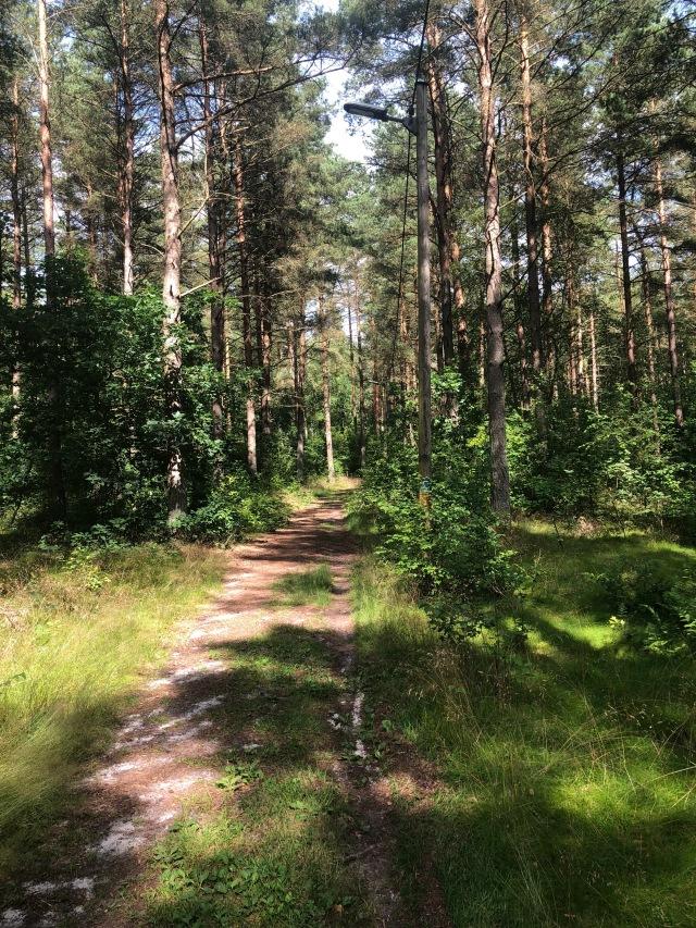 Elljusspåret i Brösarp - Källaskogen