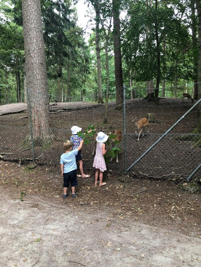 Mata Dovhjortar med lönnlöv i Hembygdsparken