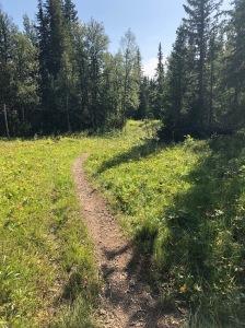 Välliste runt går i skogen i början