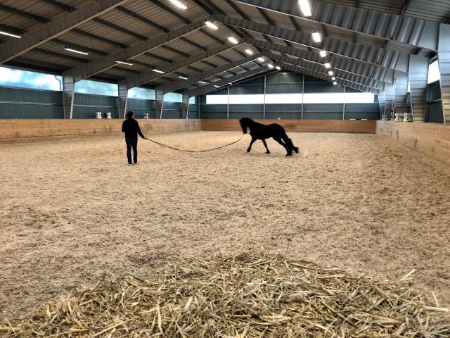 """David trillar hästar i deras """"ridhus"""""""