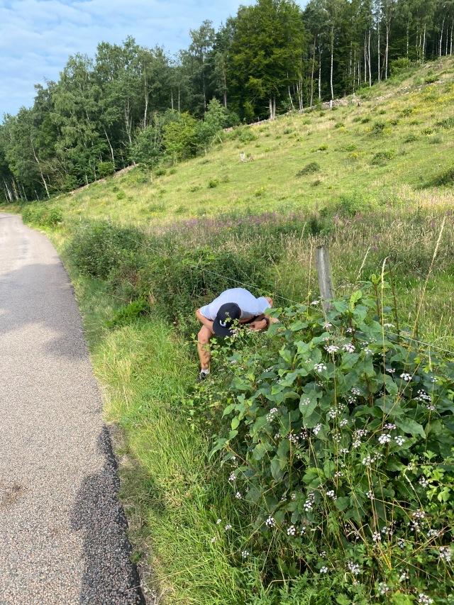 Bjäre Trail Run-banan i Sinarpsdalen