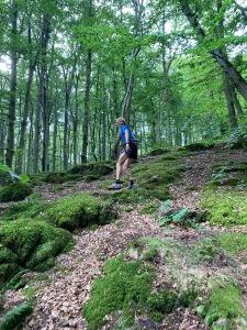 Bjäre Trail Run-banan i Axeltorps bokskogar