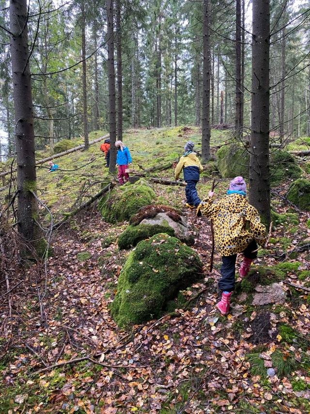 Skogsvandring